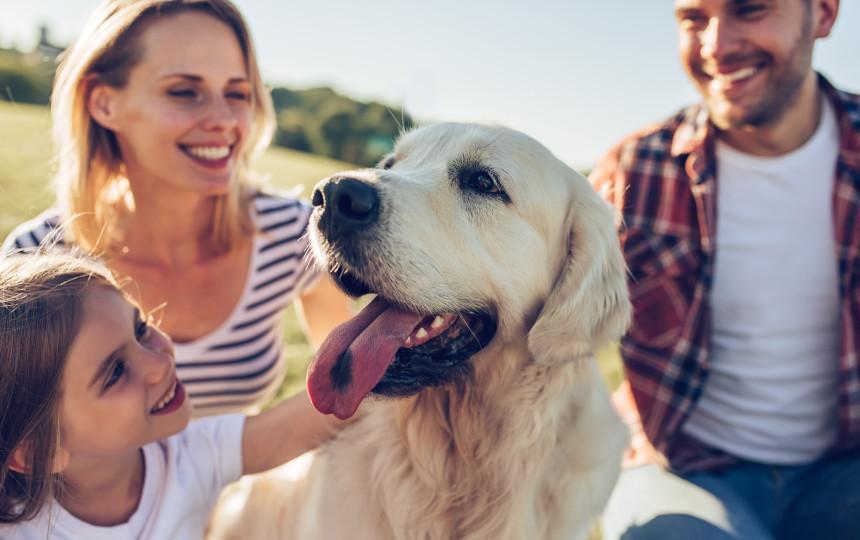 Kuo rizikuojame naudodami antiparazitines priemones šunims?